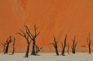 Durch Trockenheit konservierte Bäume, Dead Vlei, Namib-Naukluft-Nationalpark, Namibia