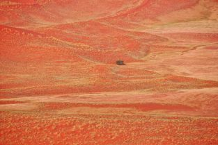 Die Wüste blüht, Namib-Naukluft-Nationalpark, Namibia