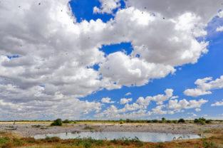 Wasserstelle im Etosha-Nationapark, Okaukuejo Namibia