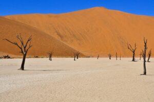 Kameldornakazien, Deadvlei, Namib-Naukluft-Nationalpark, Namibia