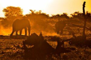 Wüstenelefanten bei Sonnenuntergang, Etosha-Nationalpark, Namibia