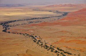 Akazienallee, Sossusvlei, Namibia
