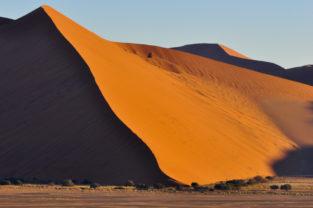 Bäume vor Sanddüne, Sossusvlei, Namib-Naukluft-Nationalpark, Namibia