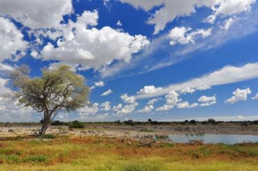 Tiere an Wasserstelle, Okaukuejo, Etosha Park, Namibia