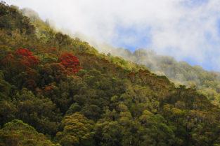 Subtropischer Urwald am Franz-Josef-Gletscher, Westland-Nationalpark, Neuseeland