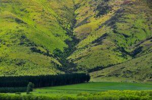 Schafherde auf grüner Bergwiese, Otago, Neuseeland