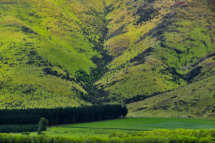 Schafe auf Bergwiesen, Otago, Neuseeland