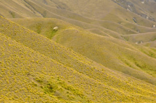 Steppe, Otaga County, Neuseeland