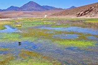 Lagune vor Vulkankulisse im Altiplano, Región Atacama,Chile
