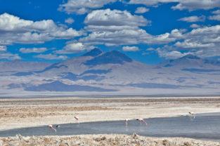 Andenflamingos auf dem Salar de Atacama, Región Atacama, Chile