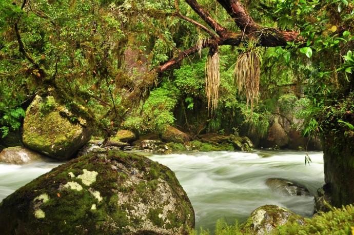 Regenwald, Valle Cochamo, Región de los Lagos, Patagonien, Chile