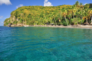 Palmen am Strand von Anse Mamin, St. Lucia, Karibik