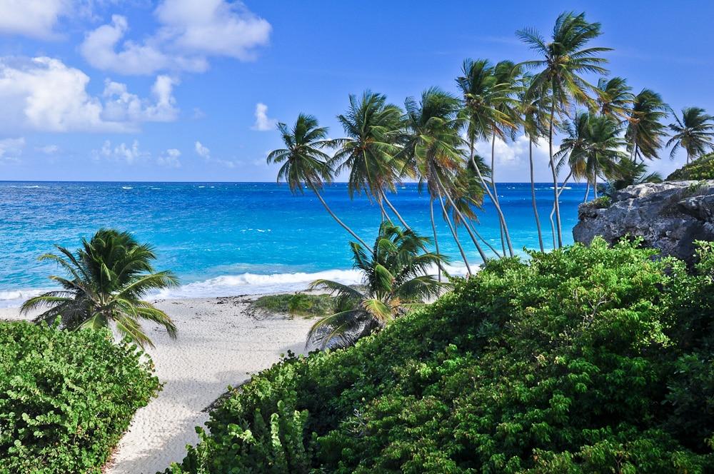 Palmenstrand Der Bottom Bay Barbados Karibik Landschaftsfotograf