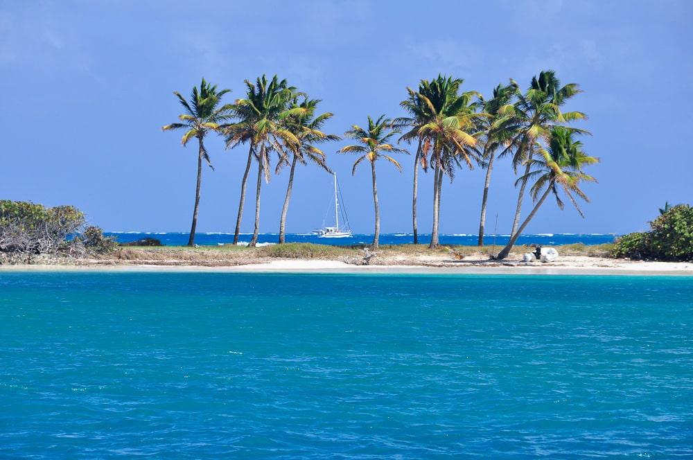 Karibik 25 Palmenstrand An Der Saltwhistle Bay Tobago Cays