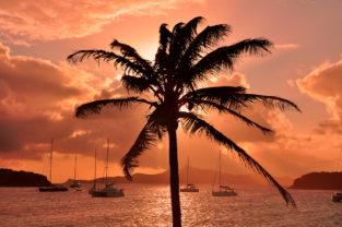 Palme meets Sonnenuntergang, Tobago Cays, St. Vincent & Grenadinen, Karibik