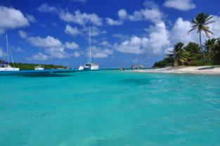 Palmenstrand auf der Insel Petit Rameau, Tobago Cays, Grenadinen, Karibik