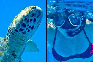 Schnorcheln mit Meeresschildkröten, Barbados, Karibik