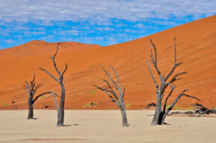 Kameldornakazien im Dead Vlei, Namib-Naukluft-Nationalpark, Namibia