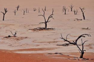 Abgestorbene Akazien im Dead Vlei, Sossusvlei, Namib-Wüste, Namibia