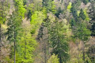 Baumfarben im Frühjahr, Schwarzwald, Baden-Würtemberg