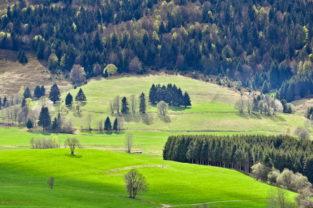 Schwarzwald im Frühling, Baden-Würtemberg