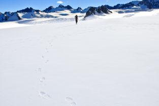 Bergsteigerin auf Schneefeld, Mount Cook, Südalpen, Neuseeland