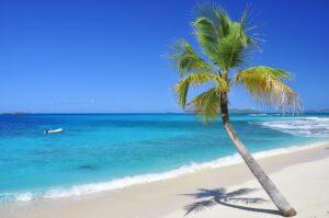 Palme am Strand, Palm Island, St. Vincent & Grenadinen, Karibik