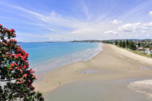 Pohutukawa-Baum am Waihi Beach, Bay of Plenty, Neuseeland