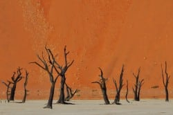 Tote Bäume, Dead Vlei, Namib-Naukluft-Nationalpark, Namibia