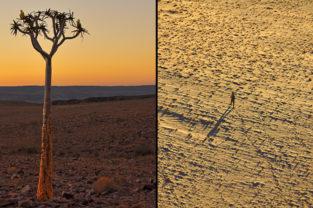 Köcherbaum und Wüstenwanderung, Namibia