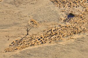 Toter Baum, Namib-Naukluft-Nationalpark, Namibia