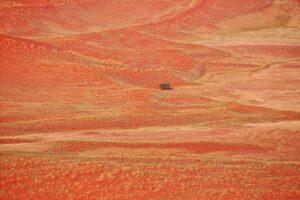 Namibia #10 - Baum und Pflanzen auf Sanddünen, Namib-Wüste
