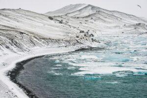 Kittywake über Eislagune, Island
