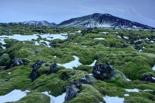Lavafeld bei Hellisheidi, Island