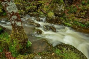 Urwald, Loch Lomond & the Trossachs Nationalpark, Schottland