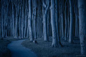 Gespensterwald in der Nacht, Nienhagen, Mecklenburg Vorpommern