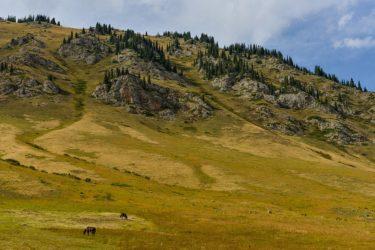 Hochalm nahe der Grenze Kirgistans, Kasachstans