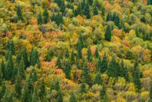 Herbstfarben im Tien Shan, Kasachstan
