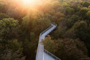 Deutschland - Urwald im Nationalpark Hainich
