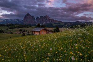 Dolomiten: Frühling auf der Seiser Alm (Alpe di Suisi), Südtirol