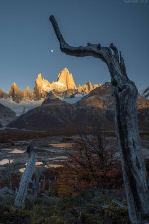 Patagonien: Verwunschene Bäume, Gipfelglühen und Mond am Fitz Roy, Los Glaciares, Argentinien