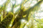 La Gomera, Lorbeerwald, Nationalpark Garajonay, Kanaren