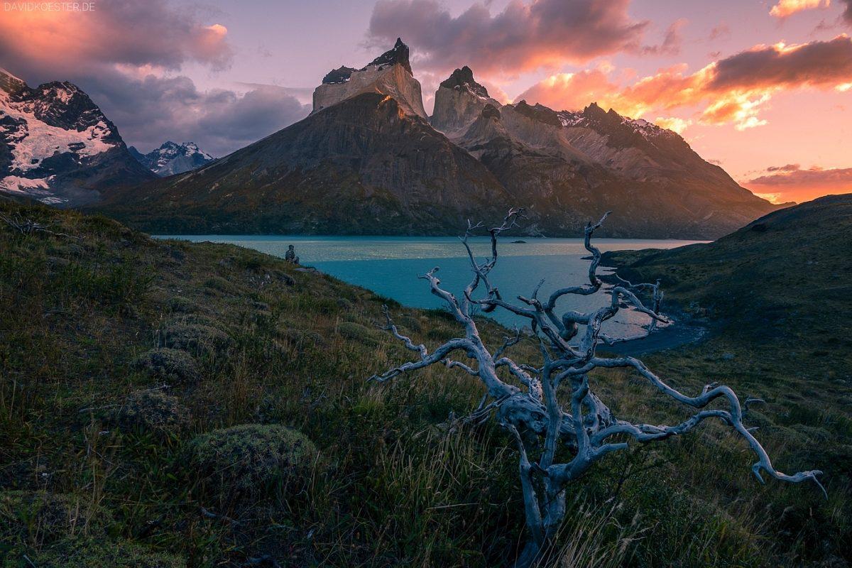 Landschaft am Lago Nordenskjöld, Torres del Paine Nationalpark, Patagonien, Chile