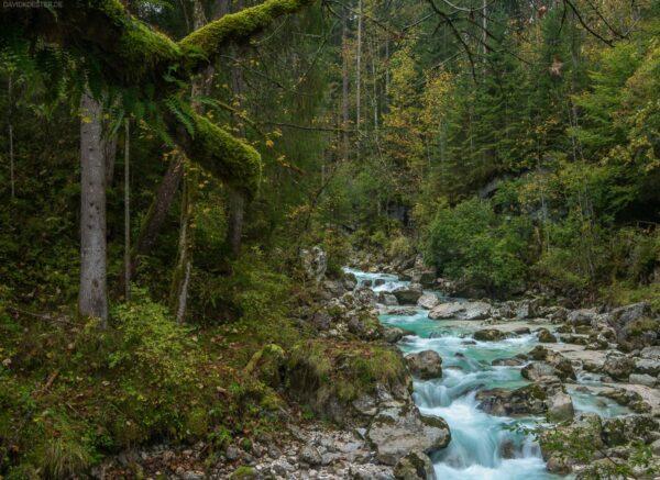 Zauberwald und Ramsauer Ache, Ramsau bei Berchtesgaden, Bayern