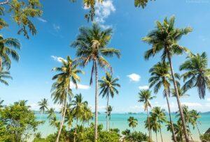 Palmen Idylle mit Blick auf Phang Nga Bucht,  Koh Yao Noi, Thailand
