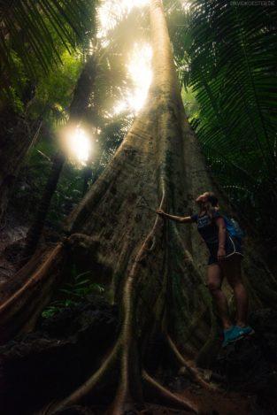Urwald bei Krabi, Thailand