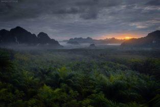 Sonnenaufgang im Urwald, Khao Sok Nationalpark, Thailand