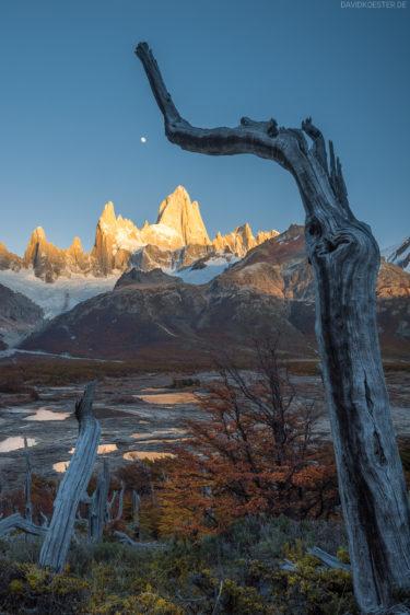 Patagonien - Baumskelette und Moor am Fitz Roy