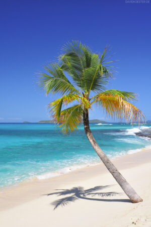 Karibik - Traumstrand auf Palm Island