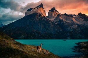 Patagonien - Vikunjas am Lago Nordenskjöld, Torres del Paine Nationalpark, Chile